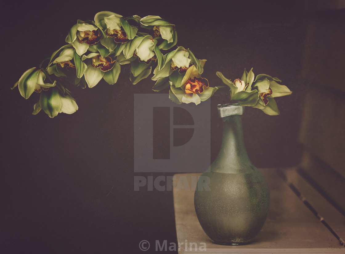 """Orchids in a vase"" stock image"