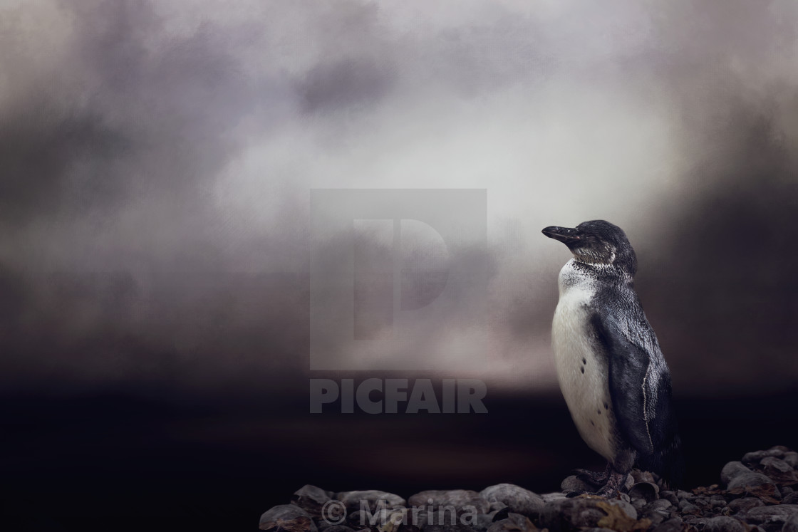 """Penguin"" stock image"
