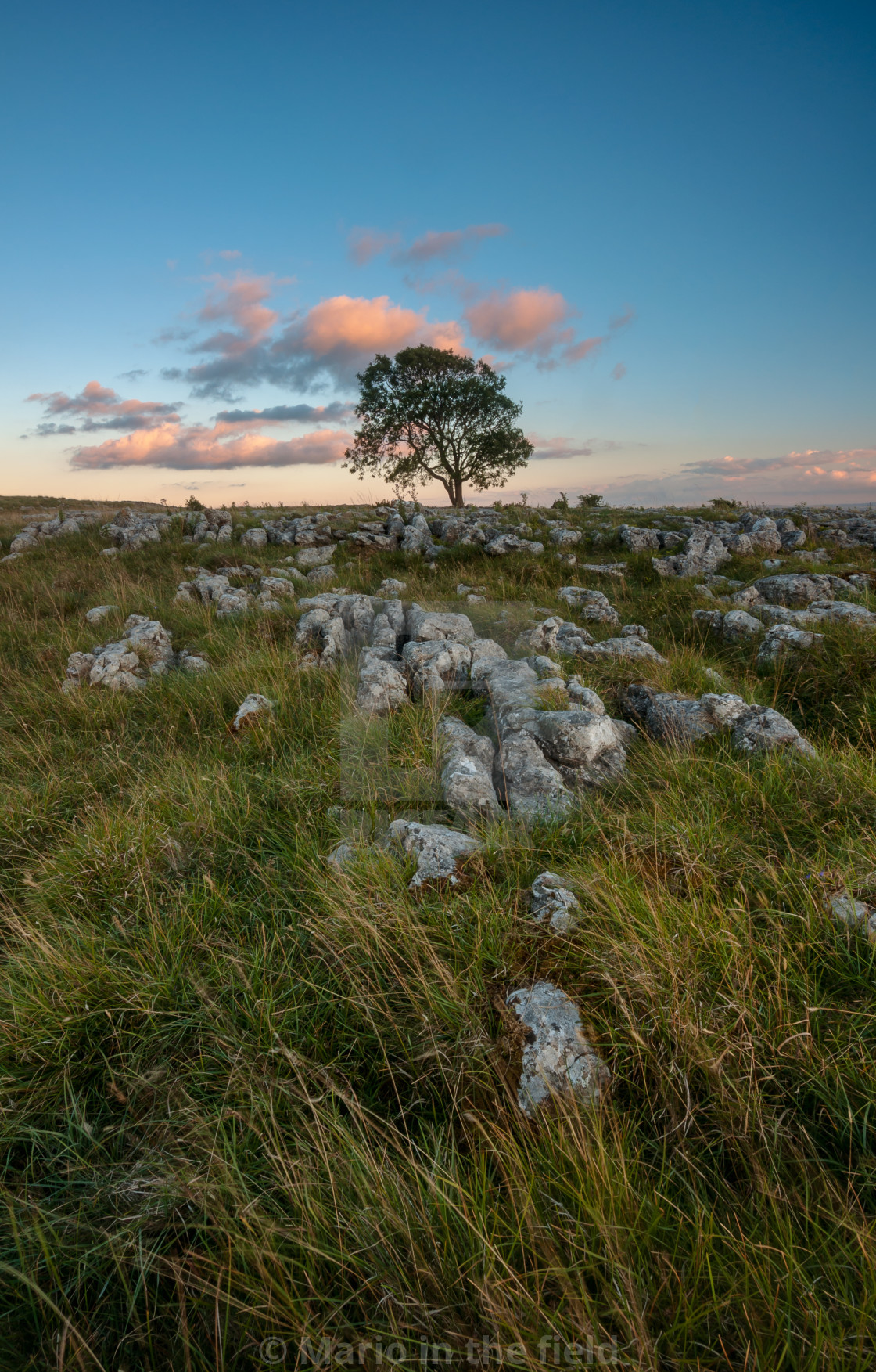 """Lonely Tree on the Limestone Pavement"" stock image"