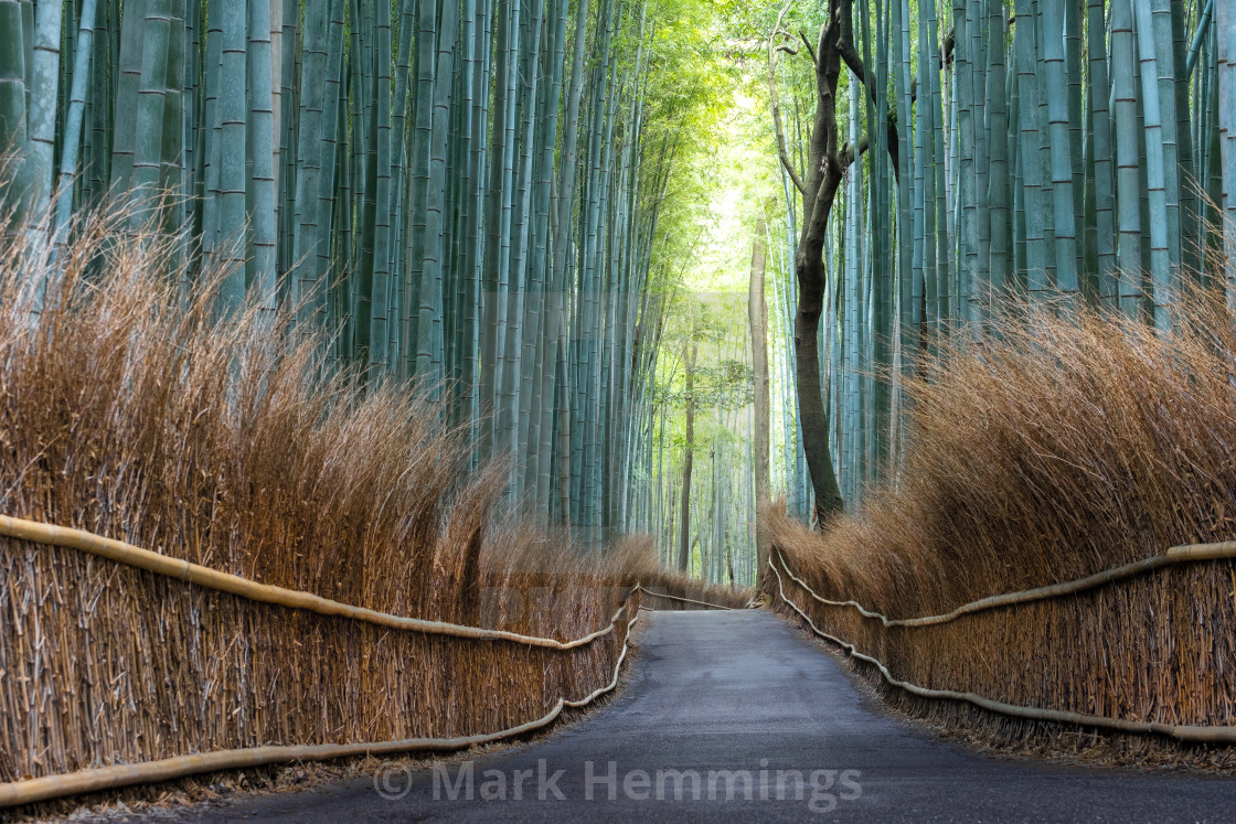 """""""Kyoto Bamboo Forest in Japan"""" stock image"""