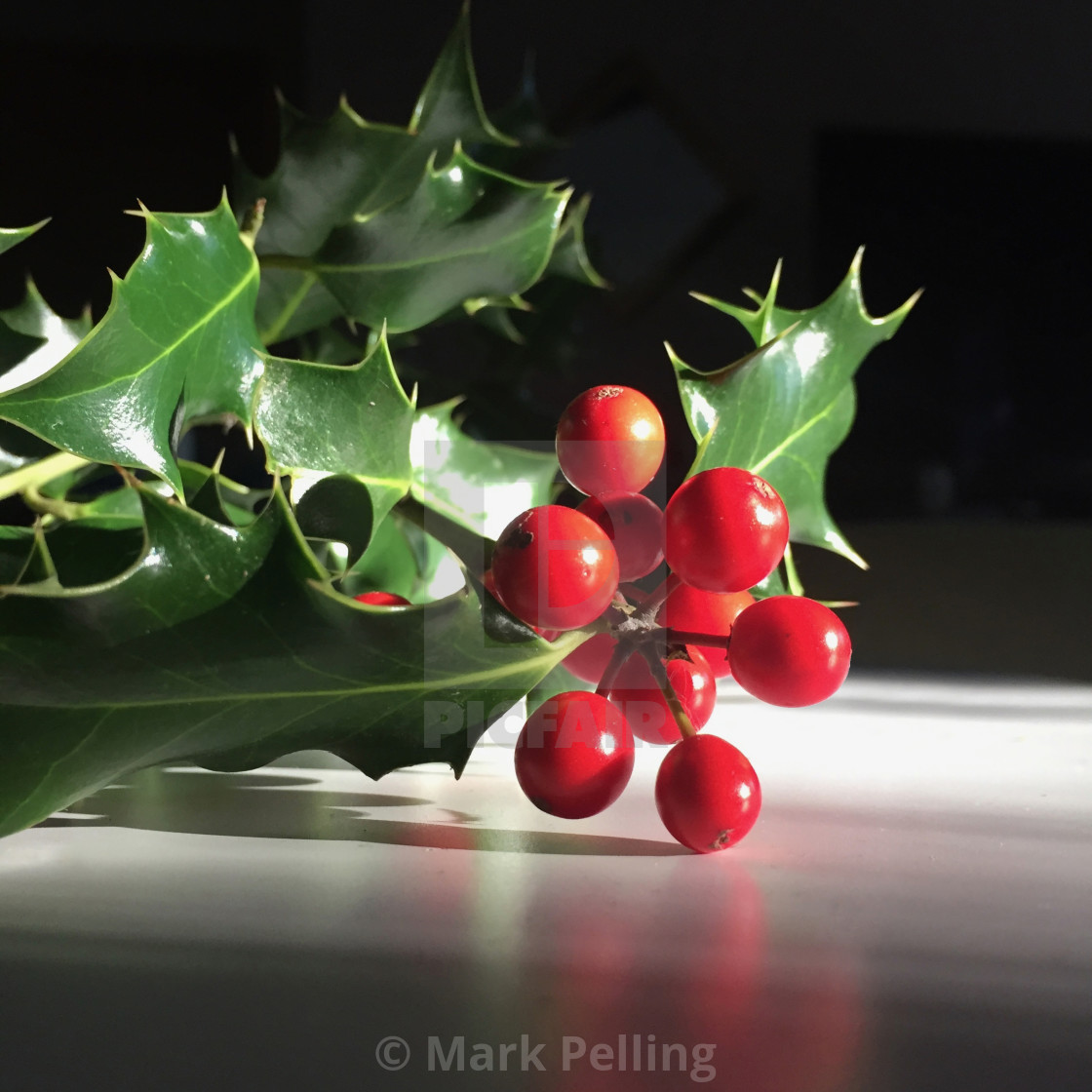 """""""Holly with red berries against a neutral background"""" stock image"""