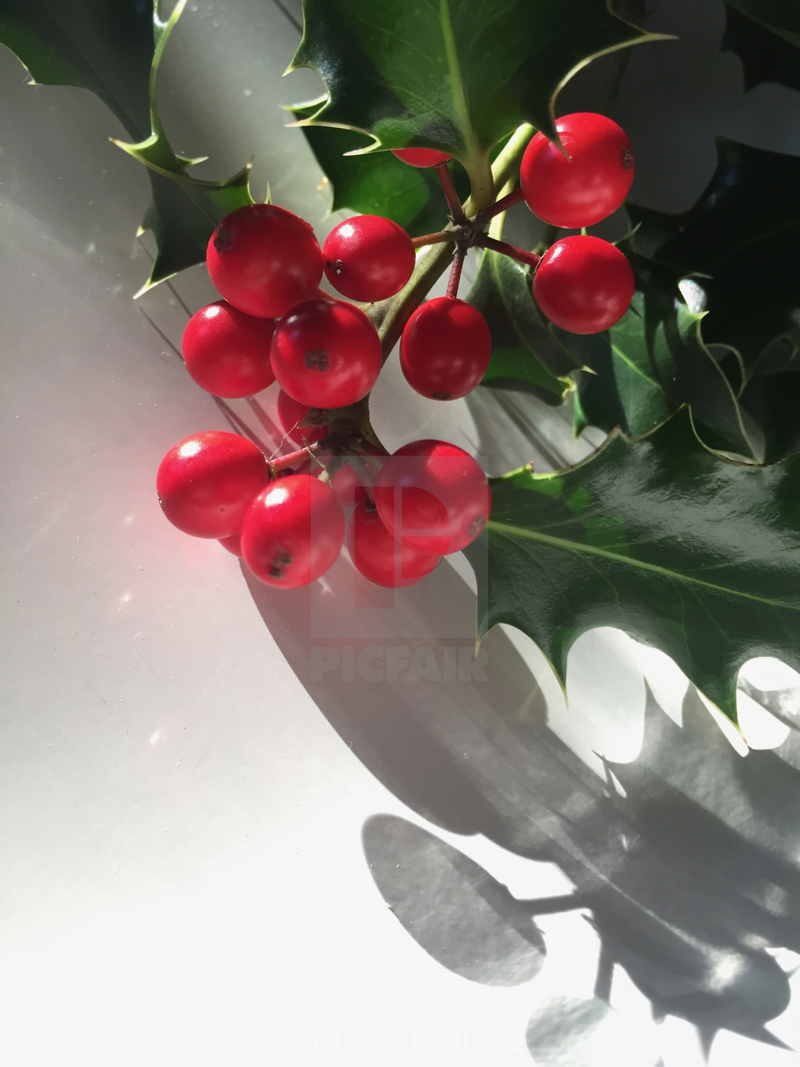 """""""Holly with red berries against a white background"""" stock image"""