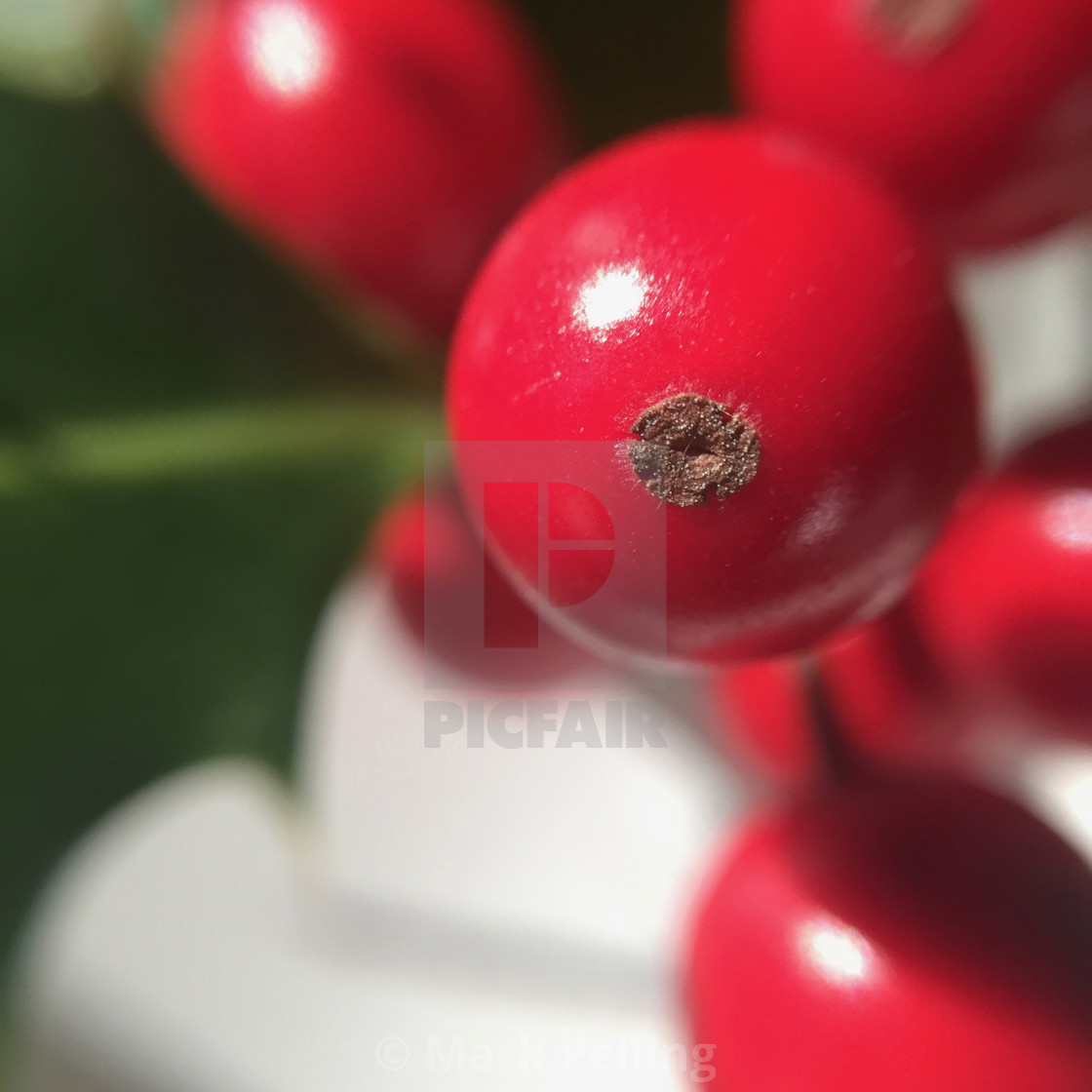 """""""Close-up of red holly berry"""" stock image"""