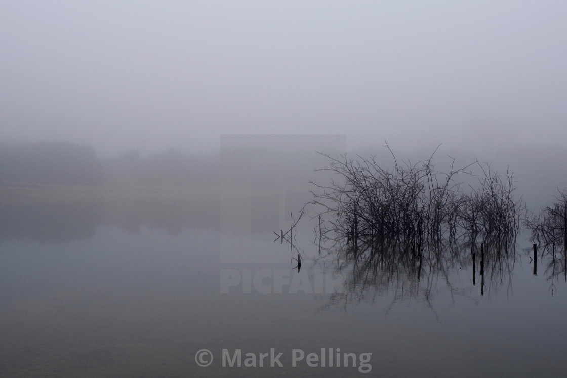 """Saplings reflected on a foggy day"" stock image"