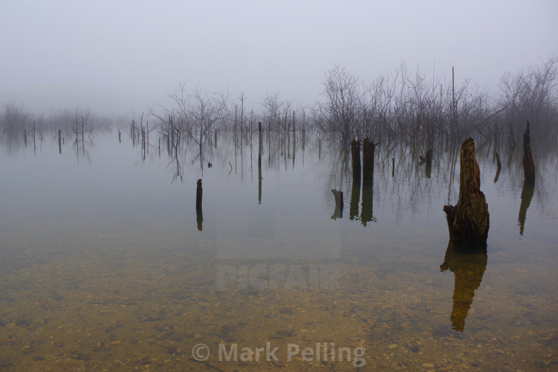 """""""Saplings and stumps reflected on a foggy day"""" stock image"""