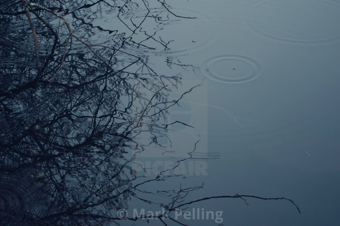 """""""Branches reflected in water"""" stock image"""