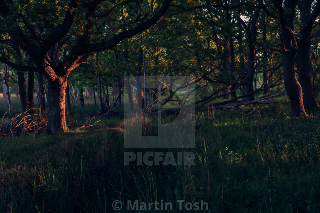 """Sidelit woodland with fallen tree"" stock image"