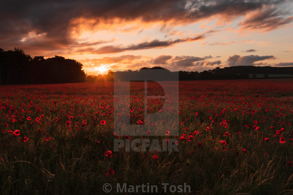 """Backlit moody sunrise over Norfolk poppy field i"" stock image"