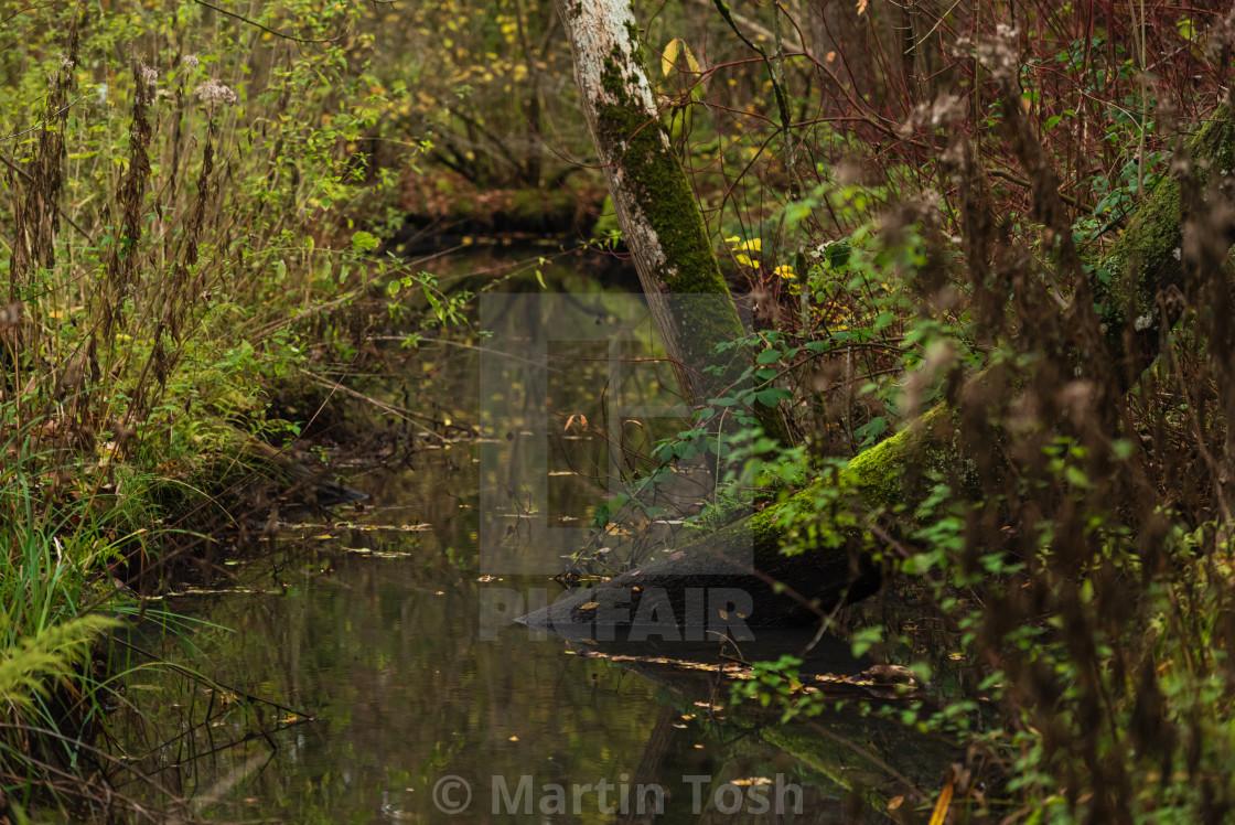 """Woodland wetlands in autumn i."" stock image"