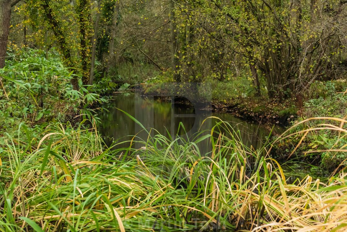 """Woodland wetlands in autumn ii."" stock image"