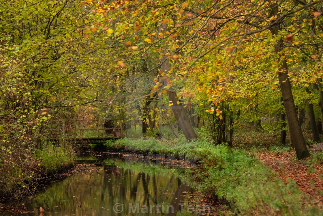 """Woodland wetlands in autumn v."" stock image"
