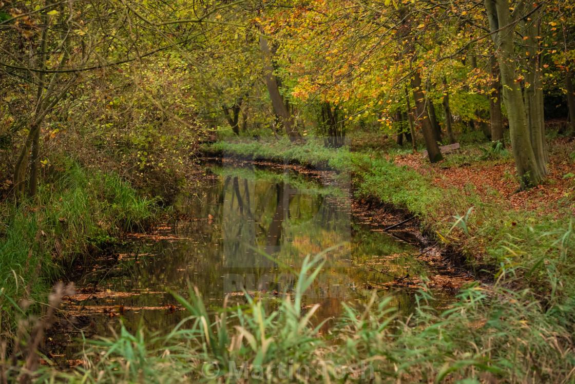 """Woodland wetlands in autumn iv."" stock image"