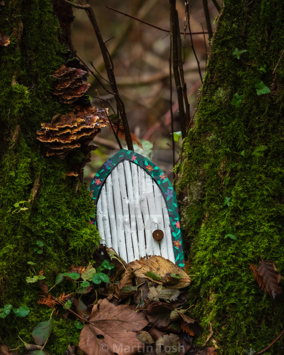 """""""Toy pixie door on mossy tree."""" stock image"""