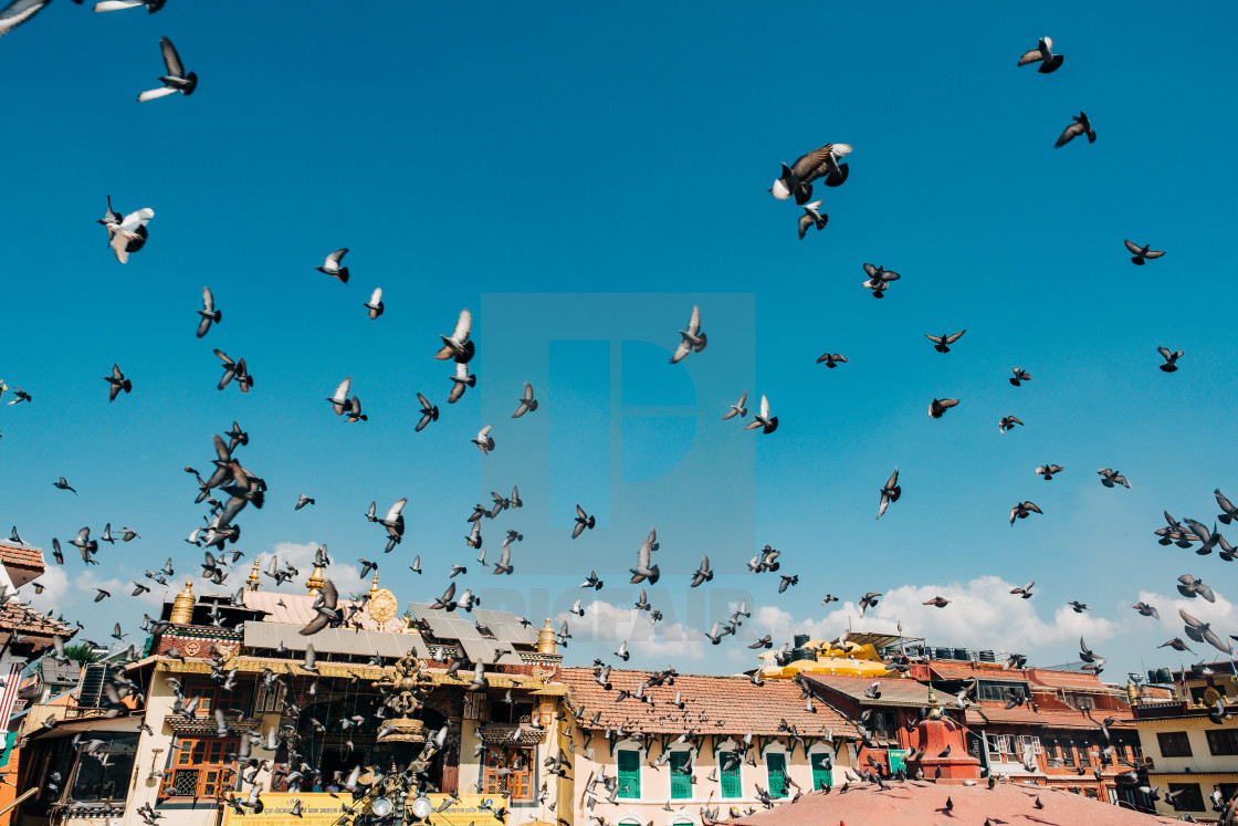 """""""Too Many Pigeons"""" stock image"""