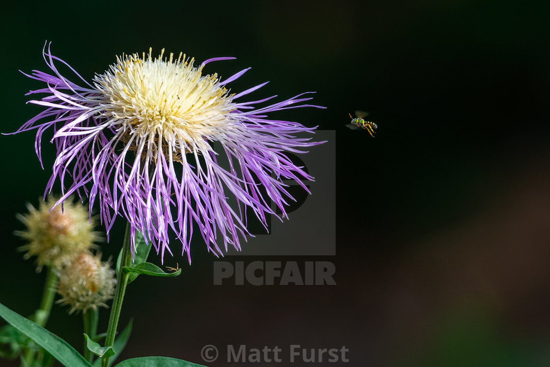 """""""Flower and Bee"""" stock image"""
