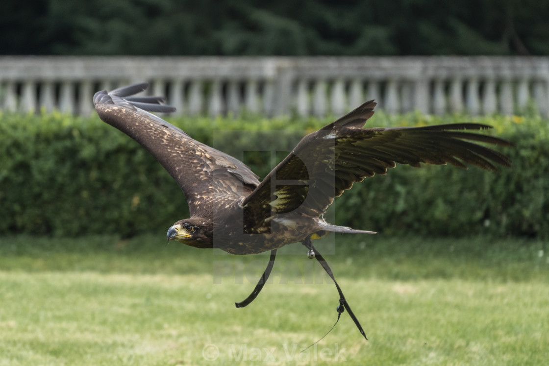 """Bird Of Prey"" stock image"