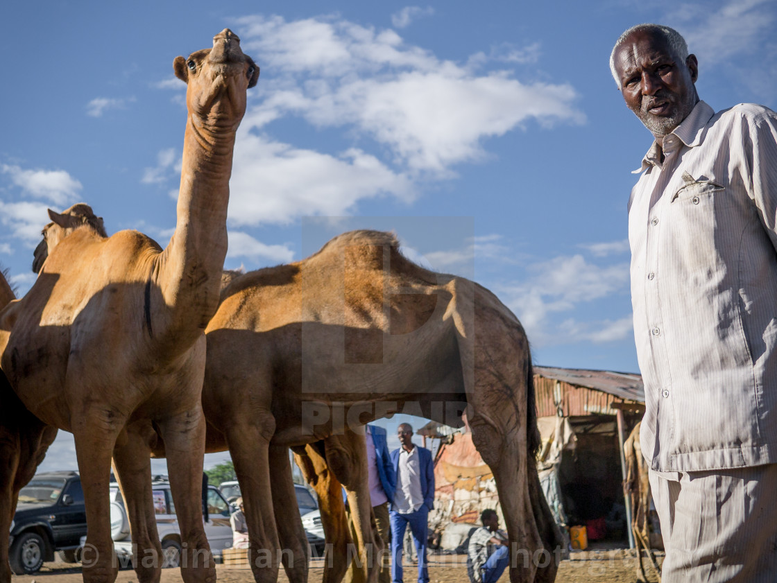 """""""At the camel market"""" stock image"""