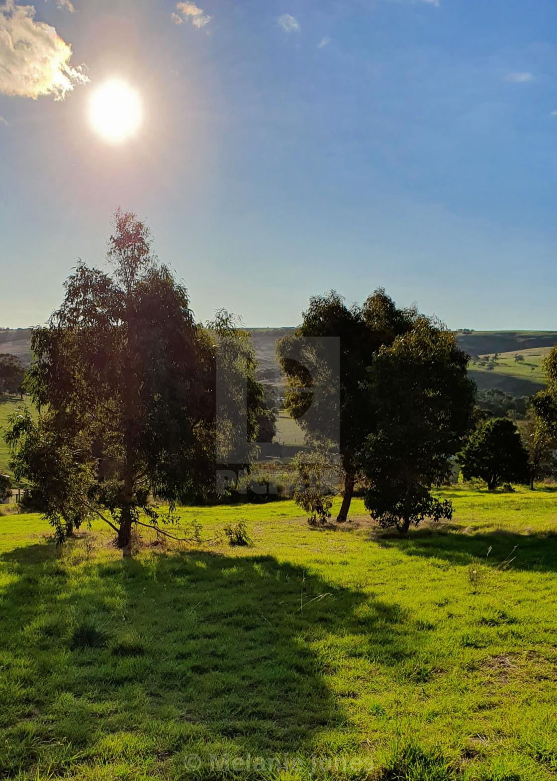 """Sun over tree Fleurieu Peninsula South Australia"" stock image"