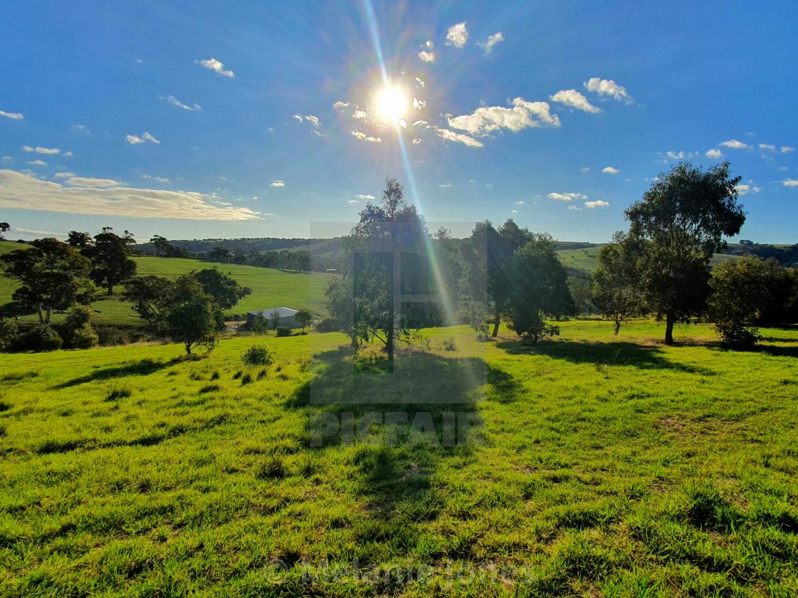 """""""Sun over tree Autumn Fleurieu Peninsula"""" stock image"""