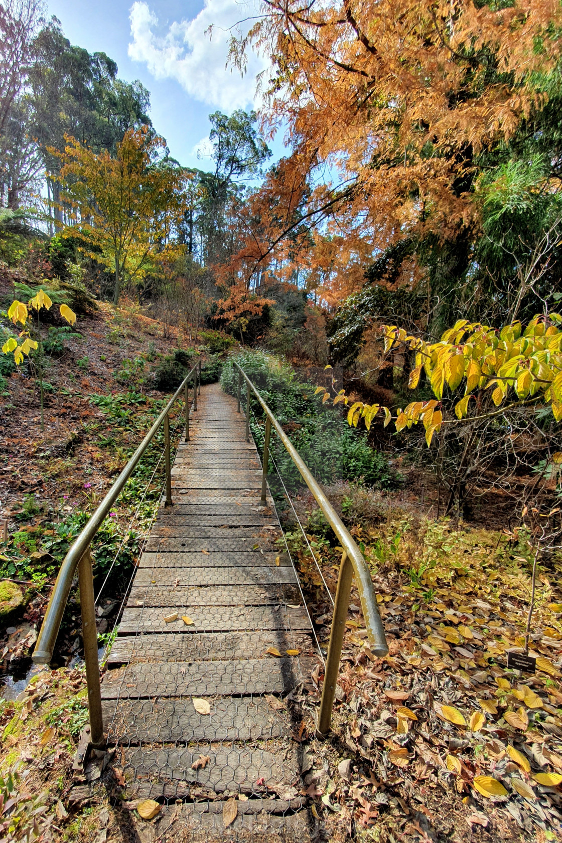 """Autumn Mount lofty botanic gardens"" stock image"