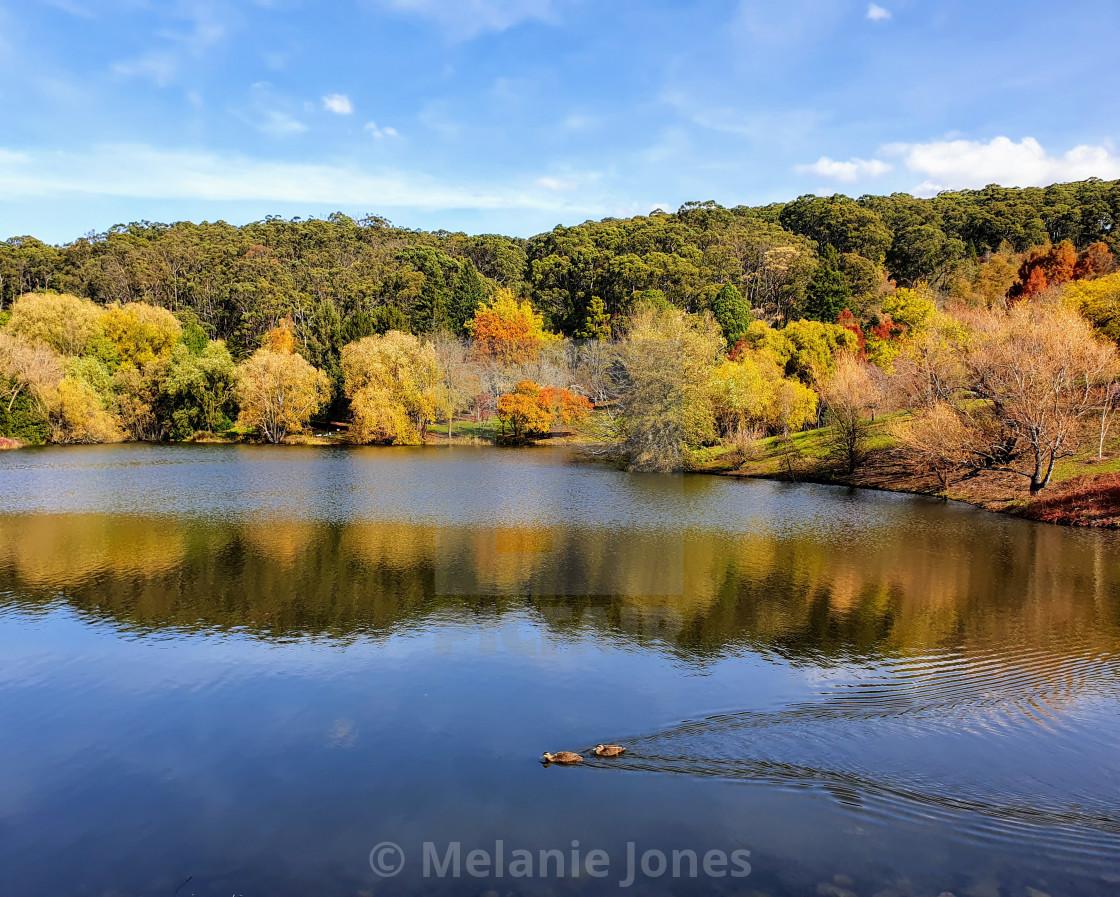 """Autumn pond with ducks Crafers SA"" stock image"