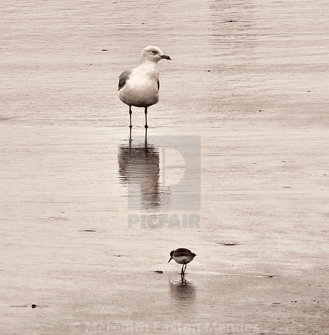 """""""Social Distancing for the Birds"""" stock image"""