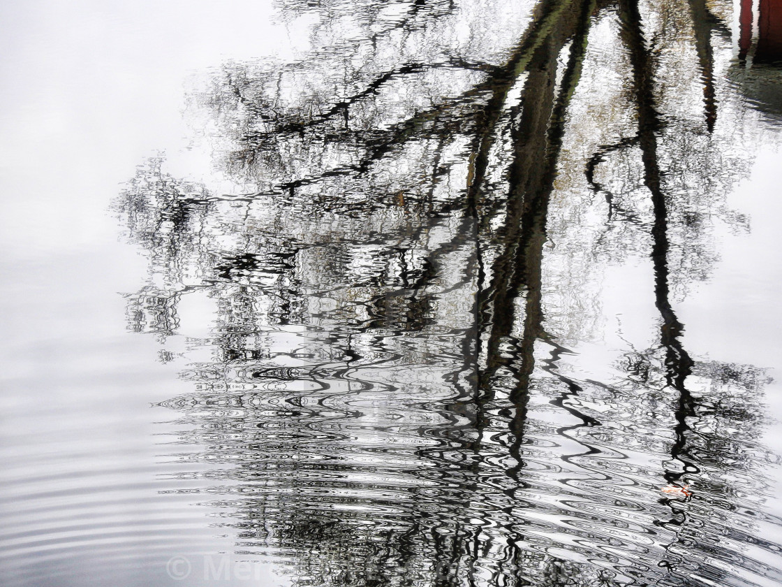 """""""Winter Tree Reflection in Pond"""" stock image"""