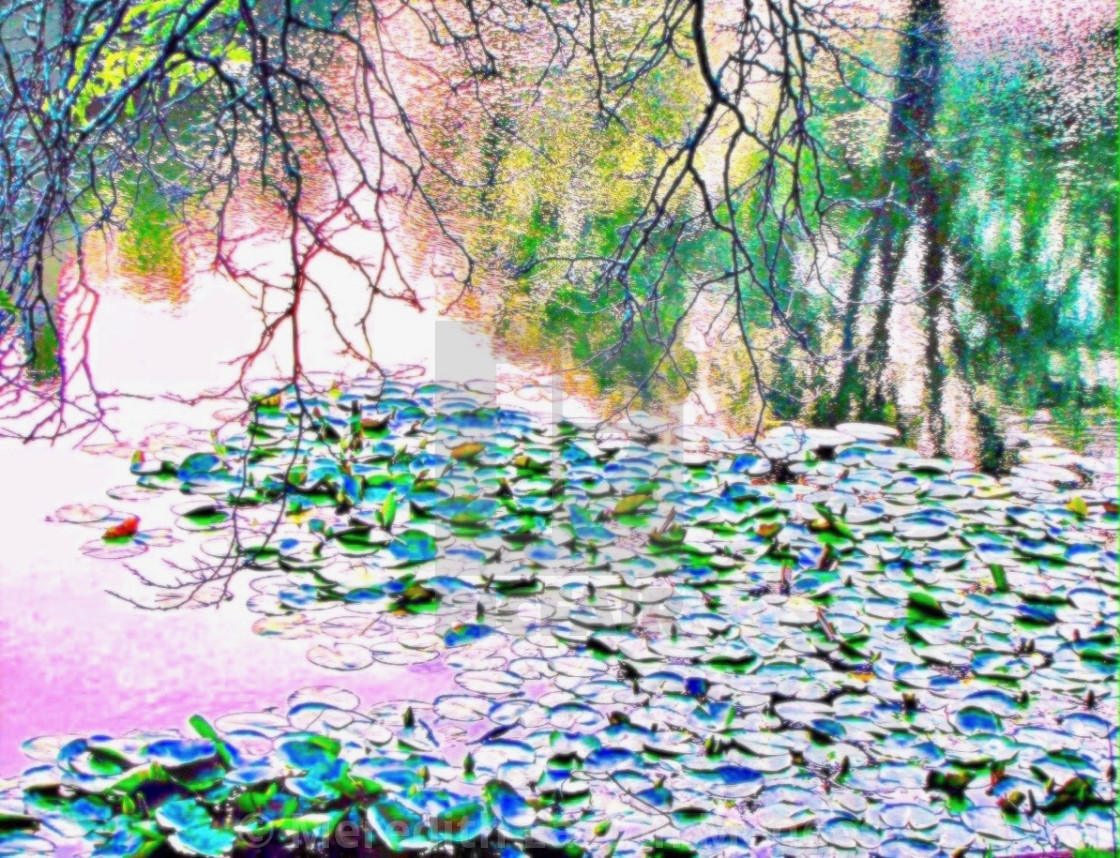 """""""Lily Pond In Spring"""" stock image"""