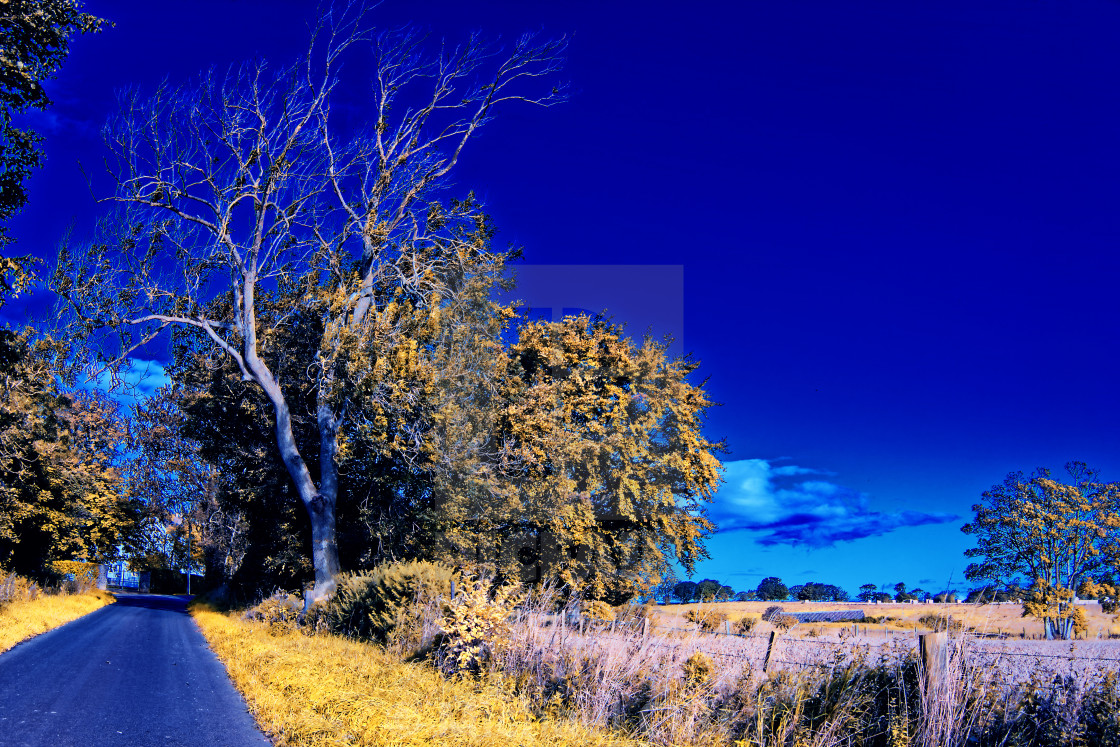 """""""Tree by the roadside"""" stock image"""