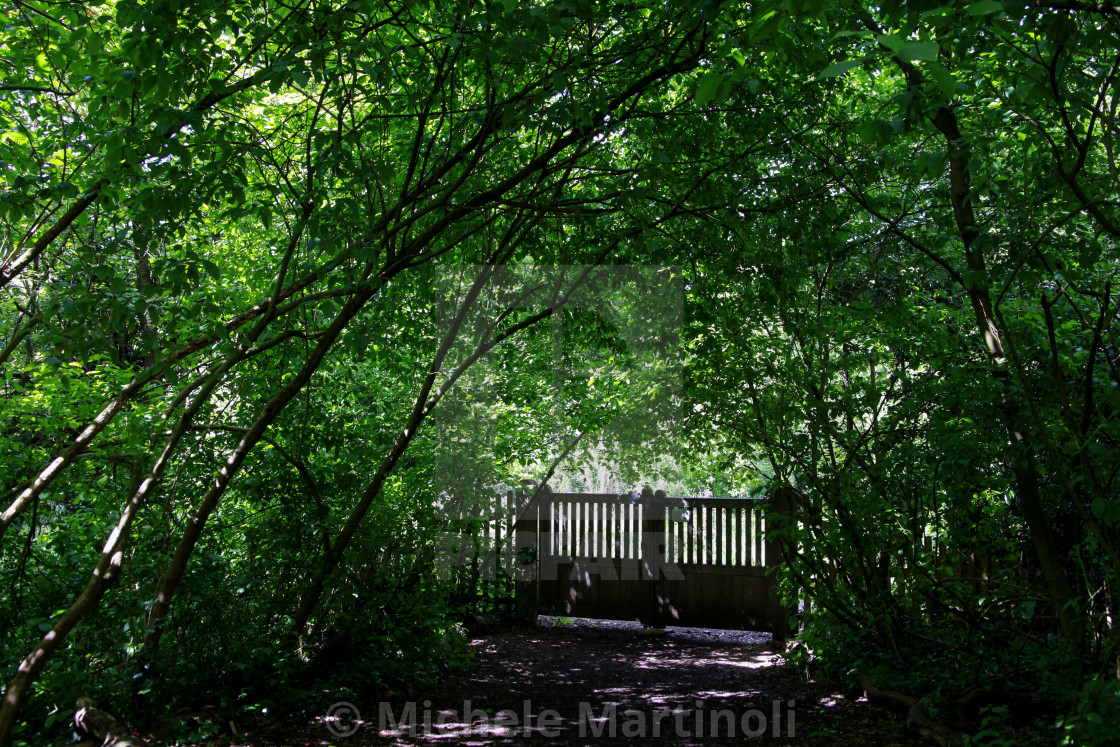 """Thicket in Holland Park"" stock image"