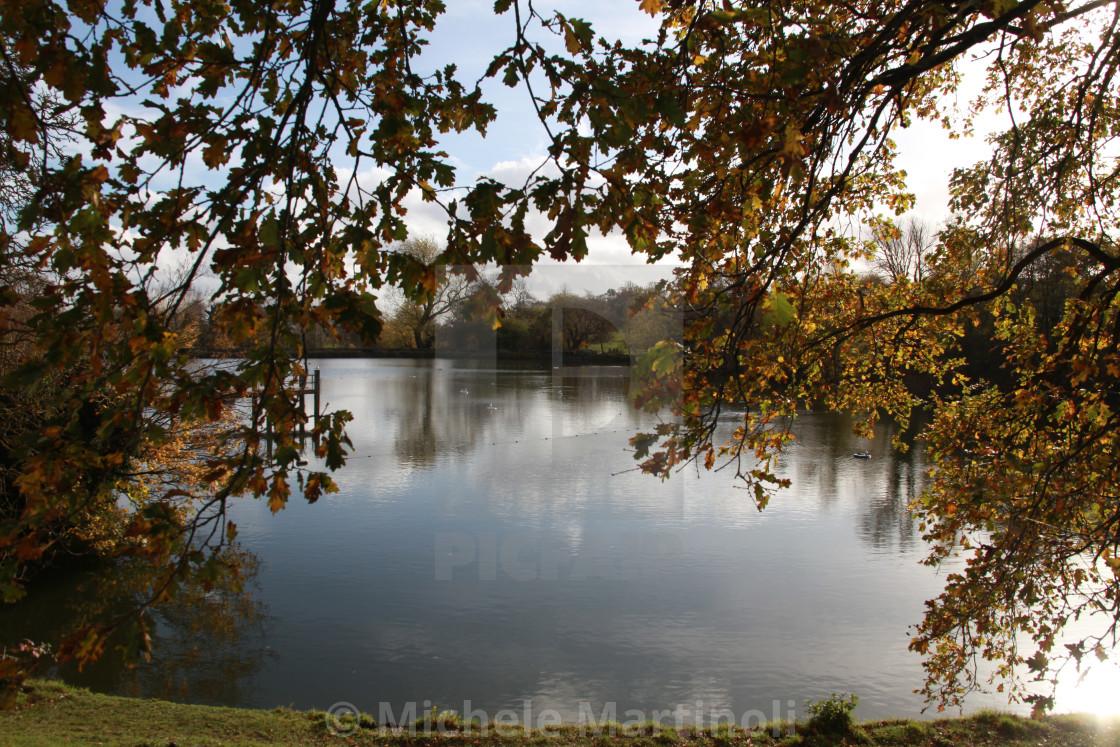 """""""Hampstead Pond in November 2020"""" stock image"""