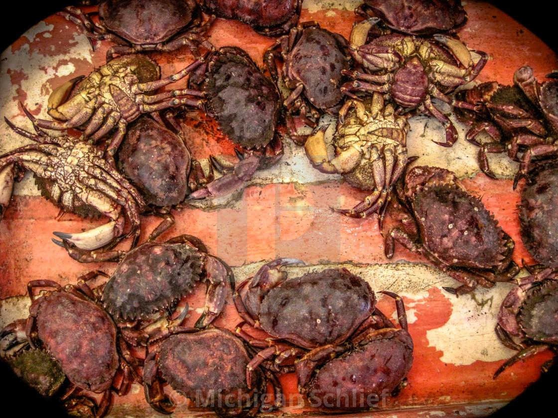"""Crab Art"" stock image"