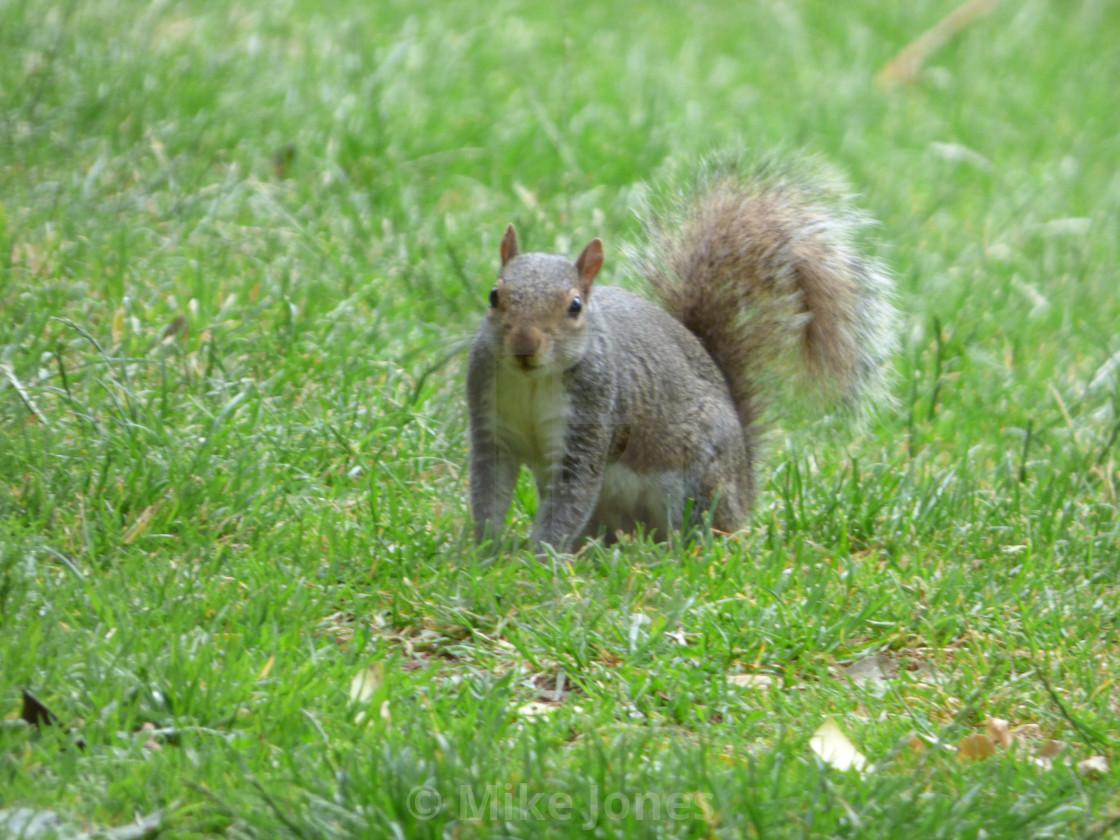 """Squirrel facing"" stock image"