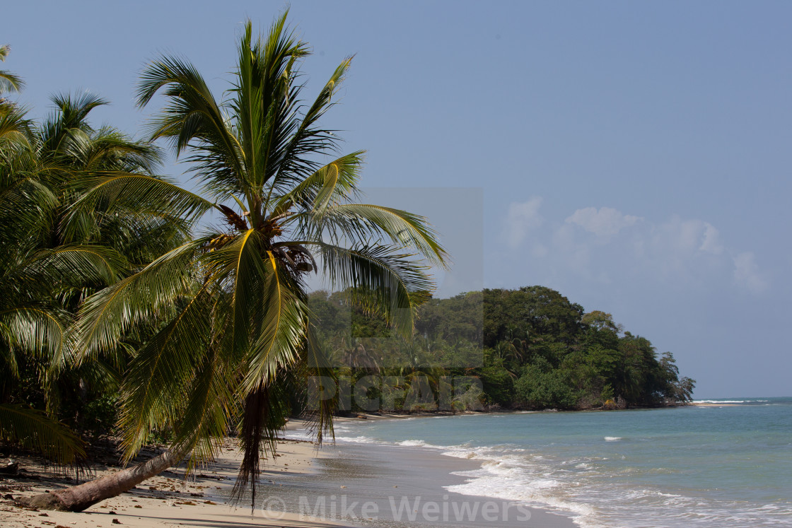 """Palm tree on the beach"" stock image"