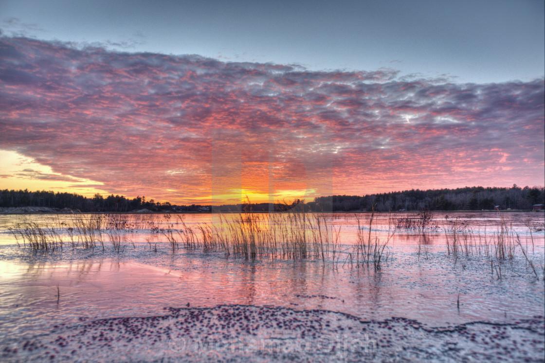 """sunset on a frozen cranberry bog 2"" stock image"