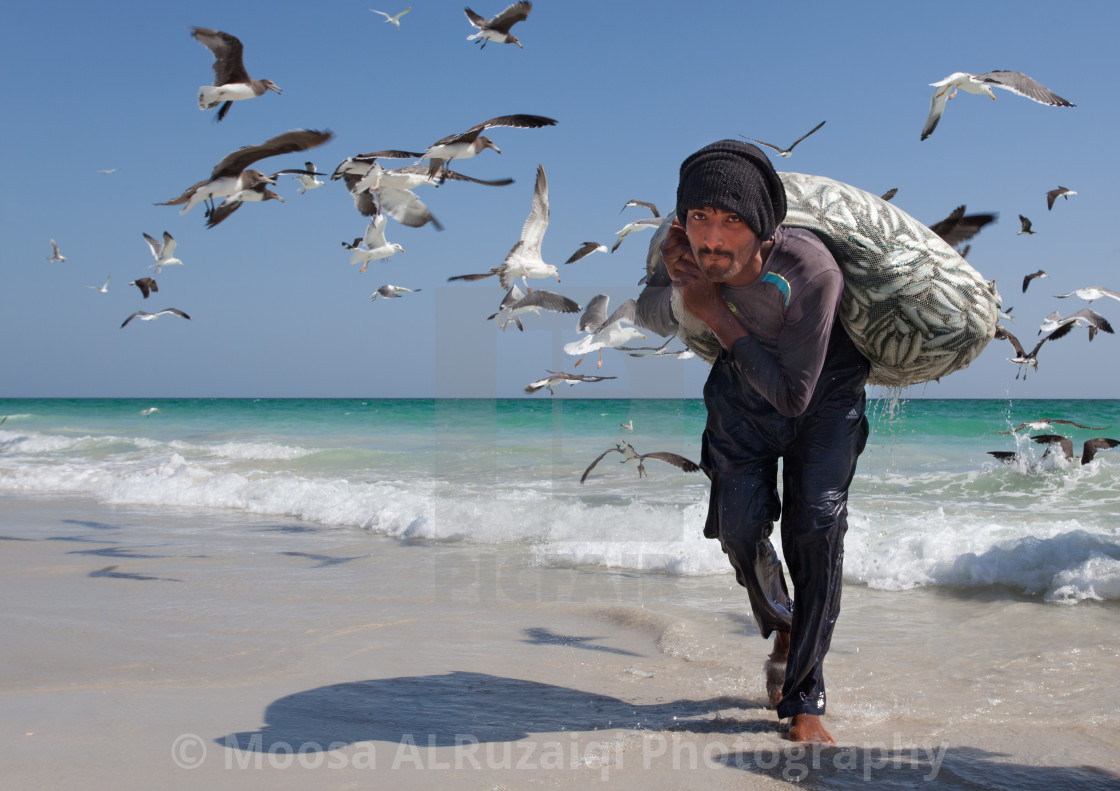 """Sardine hunter"" stock image"