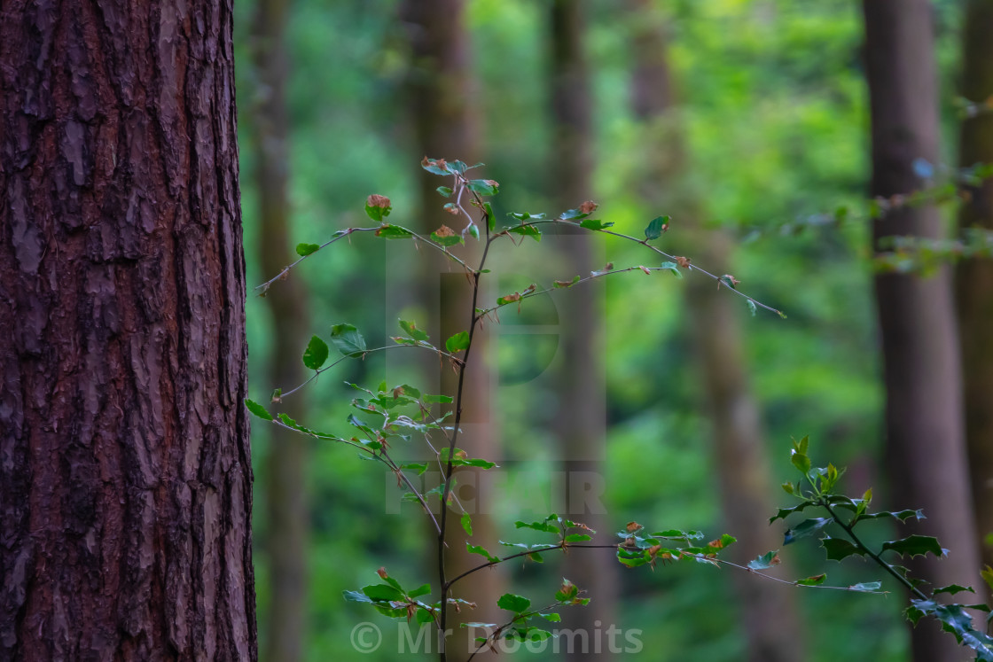 """Peaceful Forest Background"" stock image"