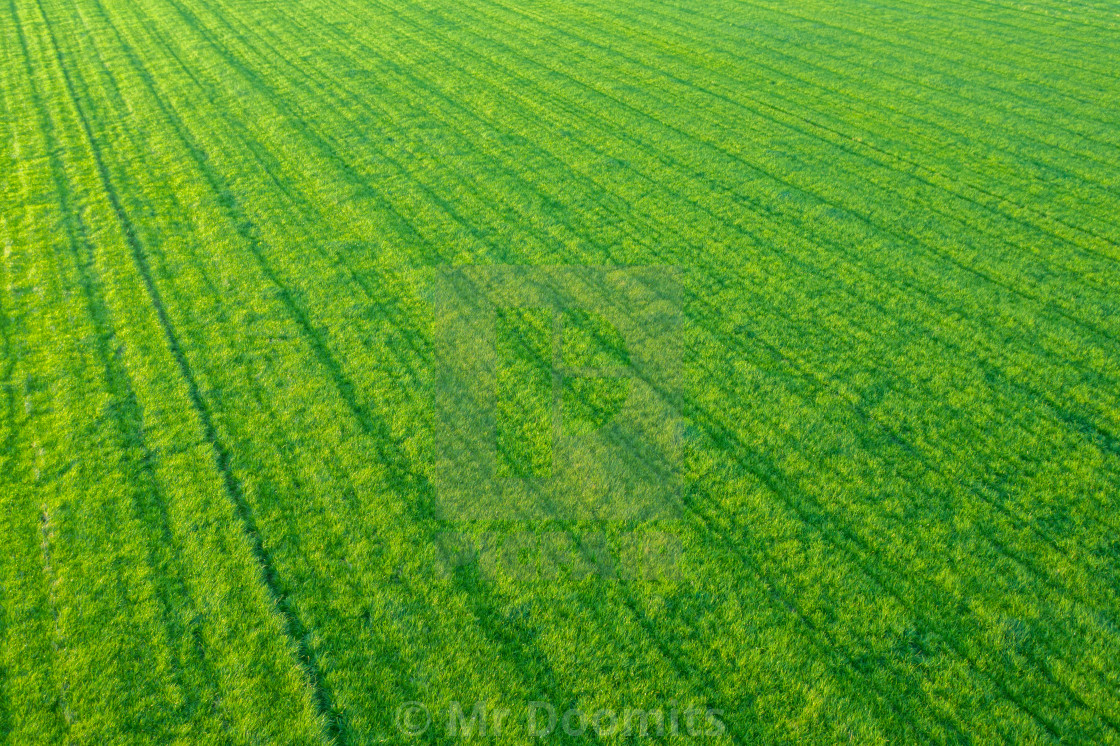 """""""Rows Of Crops From The Air"""" stock image"""