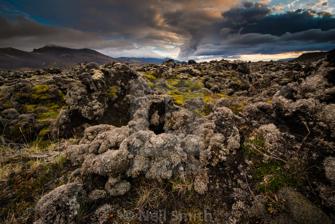 """""""Moss covered lava field in Iceland"""" stock image"""