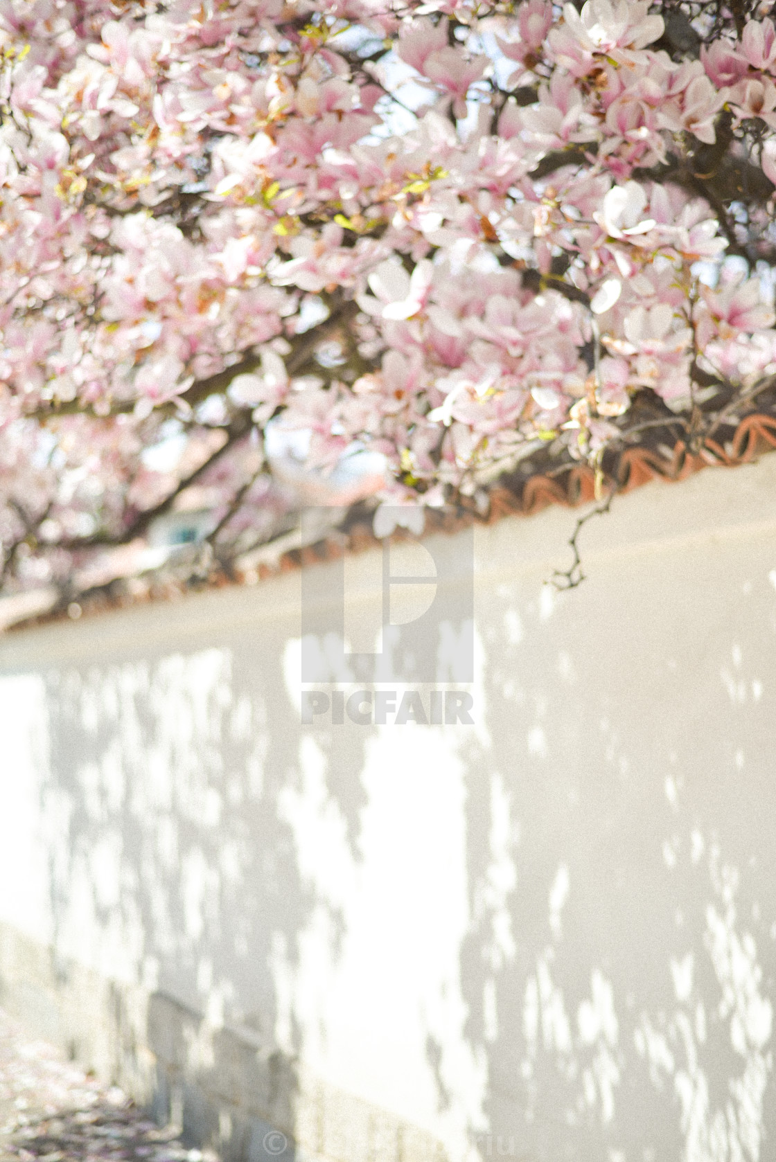 """""""Spring view"""" stock image"""