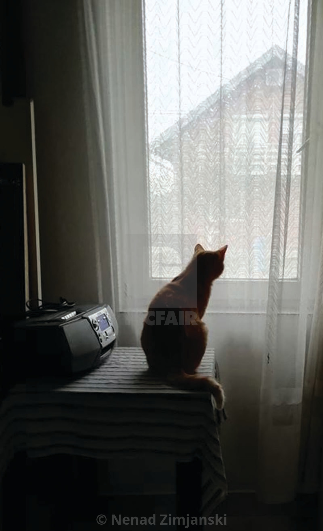 """The cat looks out the window"" stock image"