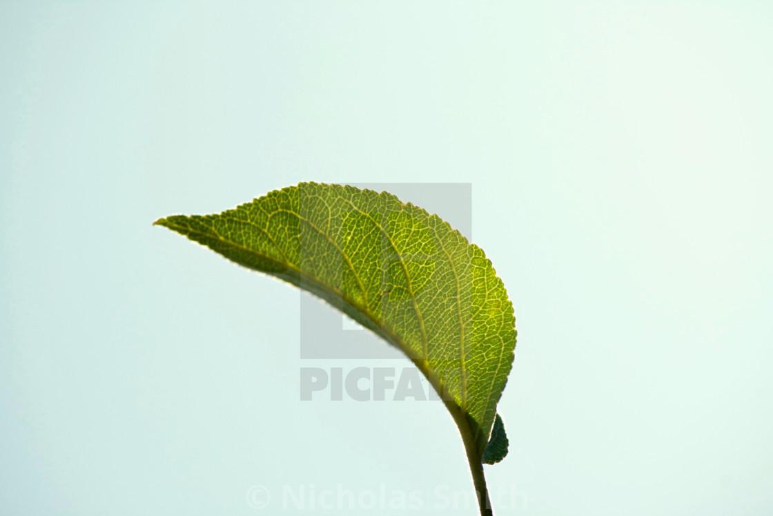 """Green leaf on blue sky background"" stock image"