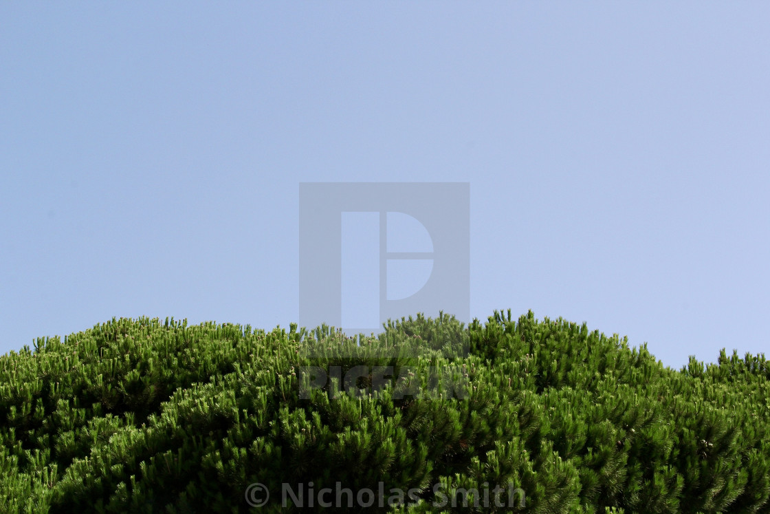 """""""Green foliage with large blue sky canvas"""" stock image"""