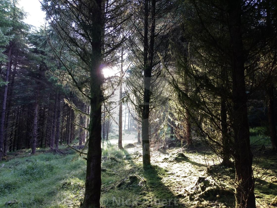 """""""Forest sunrise"""" stock image"""