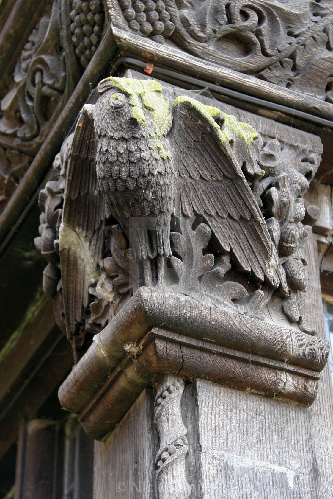 """""""The Cobwebbed Owl"""" stock image"""