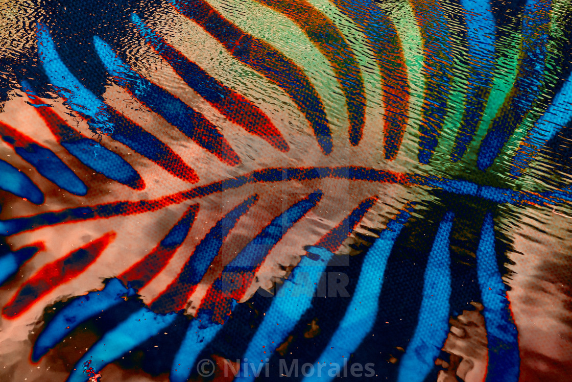 """""""Feather"""" stock image"""
