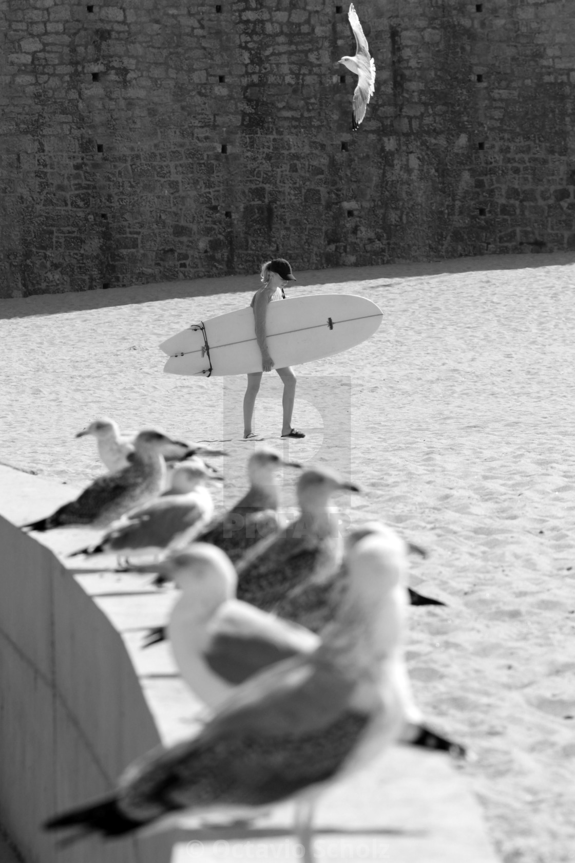 """""""Seagull Perspective"""" stock image"""