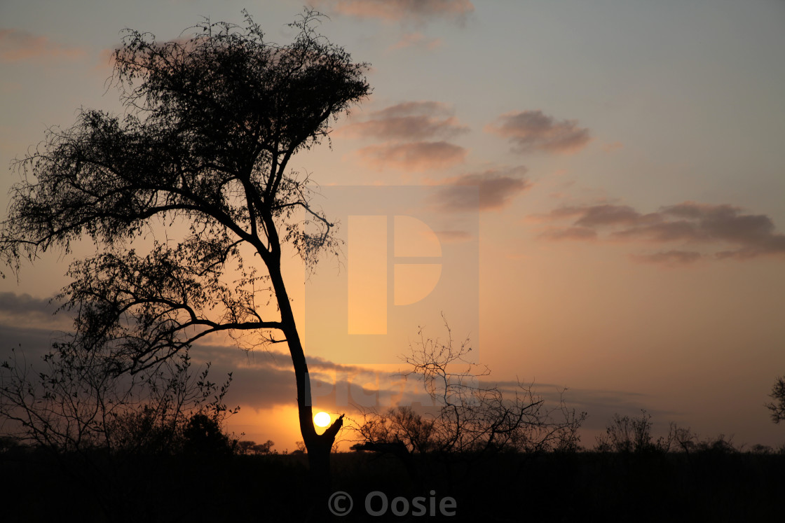 """A Bushveld sunrise"" stock image"