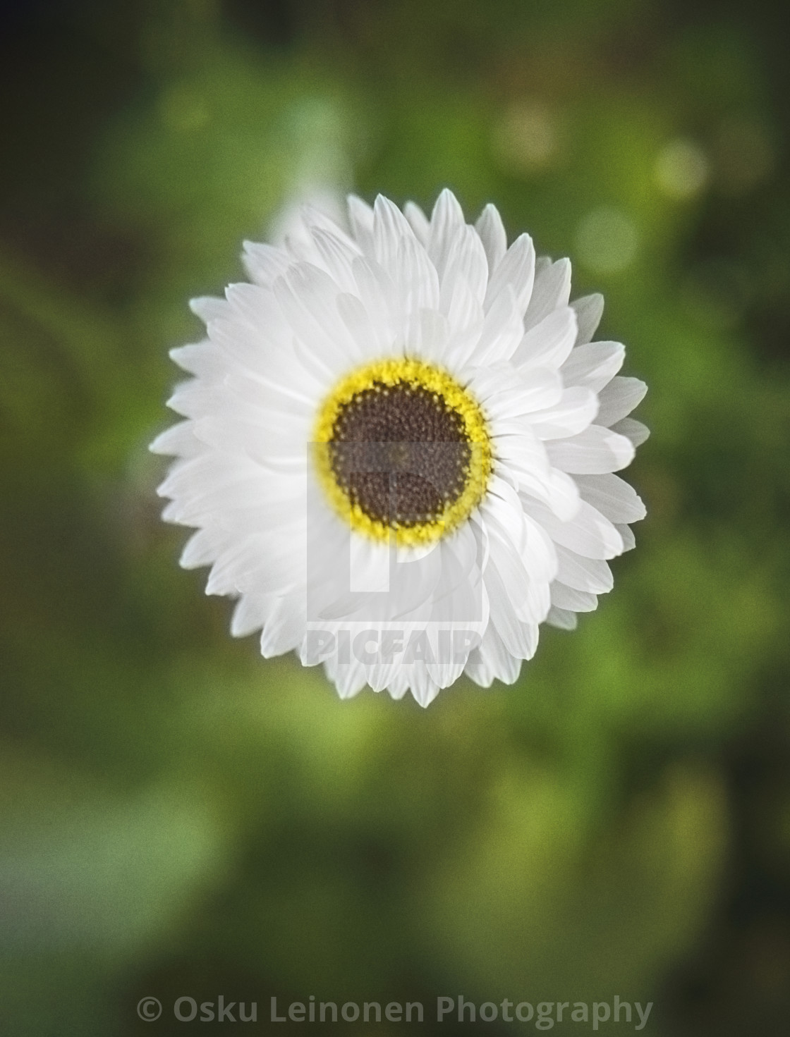 """Lovely White Petals"" stock image"