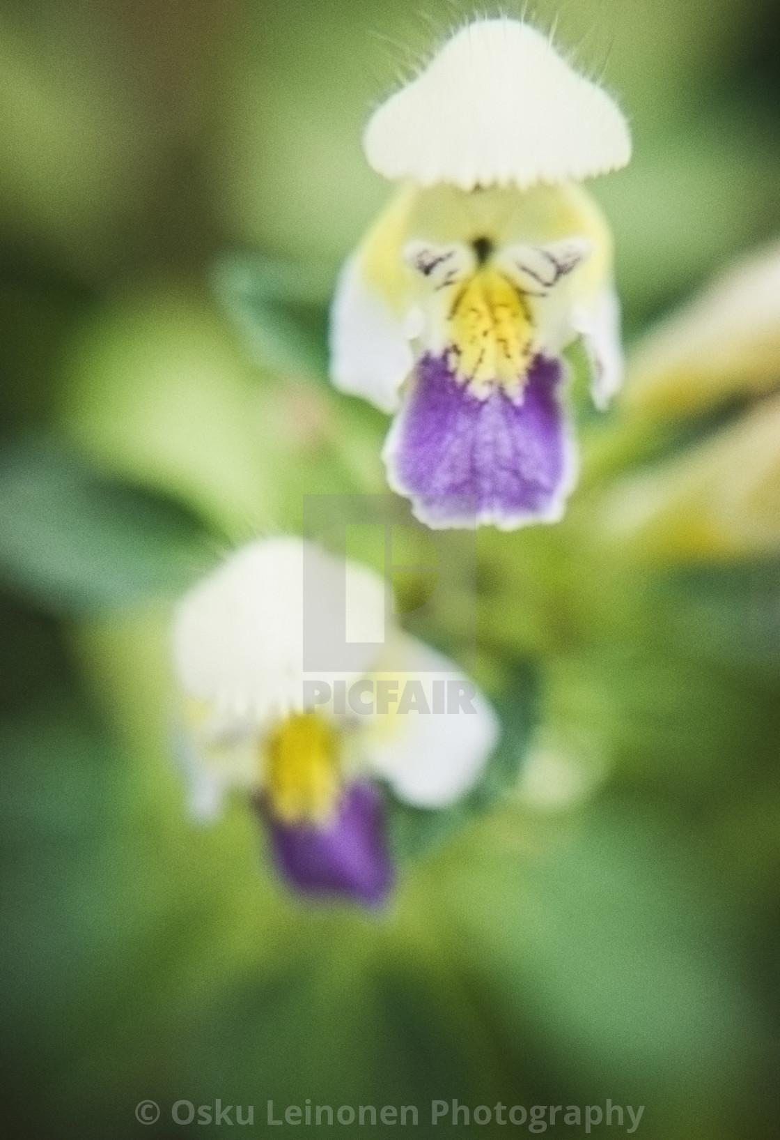 """Fantastic Flower II"" stock image"